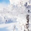 Za sneg in led